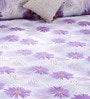Bombay Dyeing Violets Cotton Queen Size Bed Sheet - Set of 3