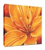 Elegant Arts and Frames Canvas 16 x 16 Inch Floral Framed Wall Art