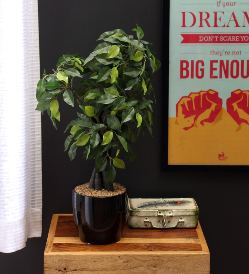 Green Polyester Artificial Ficus Bonsai Plant In Ceramic Vase by Fourwalls