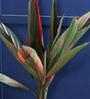 Red Polyester Artificial Cordyline Plant with 2 Trunks by Fourwalls