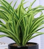Green Polyester Dracaena Plant with Ceramic Pot by Fourwalls