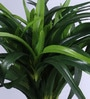 Green Polyester Dracaena Plant In Ceramic Pot by Fourwalls