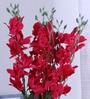 Fuscia Pink Synthetic Artificial Orchid Stems by Fourwalls