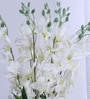 Fuscia White Synthetic Artificial Orchid Stems - Set of 8 by Fourwalls