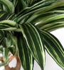 Fourwalls Green Polyester 192 Leaves Artificial Dracaena Floor Plant