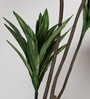 Green Polyester Artificial Cordyline Floor Plant by Fourwalls