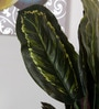 Fourwalls Green Polyester 38 Leaves Artificial Calathea Floor Plant