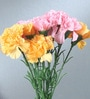 Fourwalls Multicolour Fabric Tall Artificial Single Carnation Stems - Set of 15
