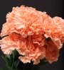 Orange Artificial Carnation Flower by Fourwalls