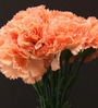 Orange Synthetic Artificial Carnation Stem - Set of 15 by Fourwalls