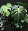 Green Polyester Philodendron Plant In Ceramic Pot by Fourwalls