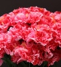 Pink Artificial Carnation Flower Set by Fourwalls