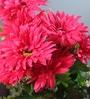 Pink Fabric Tall Artificial Gerbera Flower Bunch by Fourwalls