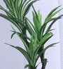 Fourwalls Green Polyester Premium Range Yucca In Ceramic Vase