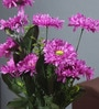 Purple Fabric Artificial Chrysanthemum Flower Bunch by Fourwalls
