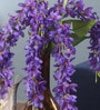 Purple Fabric Magnificent 5 Head Drooping Flower Bunch by Fourwalls