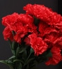 Red 18.9 Inch Artificial Carnation Flower by Fourwalls
