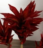 Red Polyester 171 Leaves Artificial Dracaena Plant by Fourwalls
