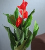 Red Synthetic Artificial Real-Touch Anthurium Plant by Fourwalls