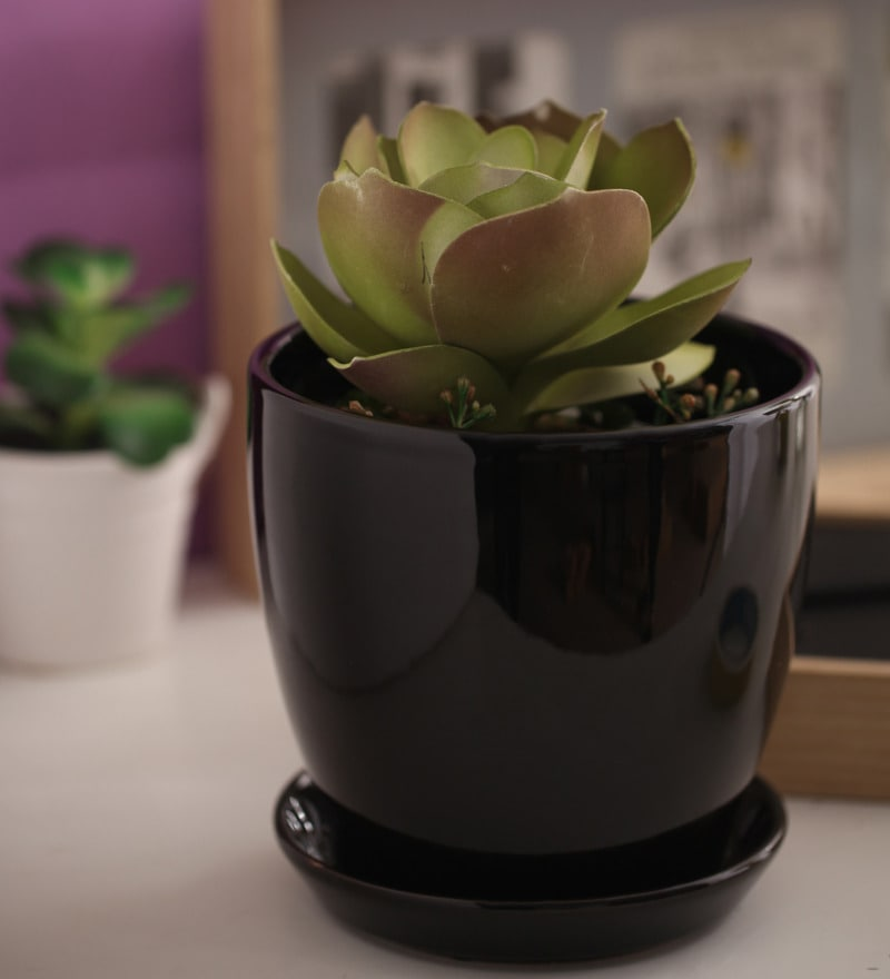 Black Glazed Ceramic 6 x 6.5 Inch Table Top Planter with Plate by Gaia