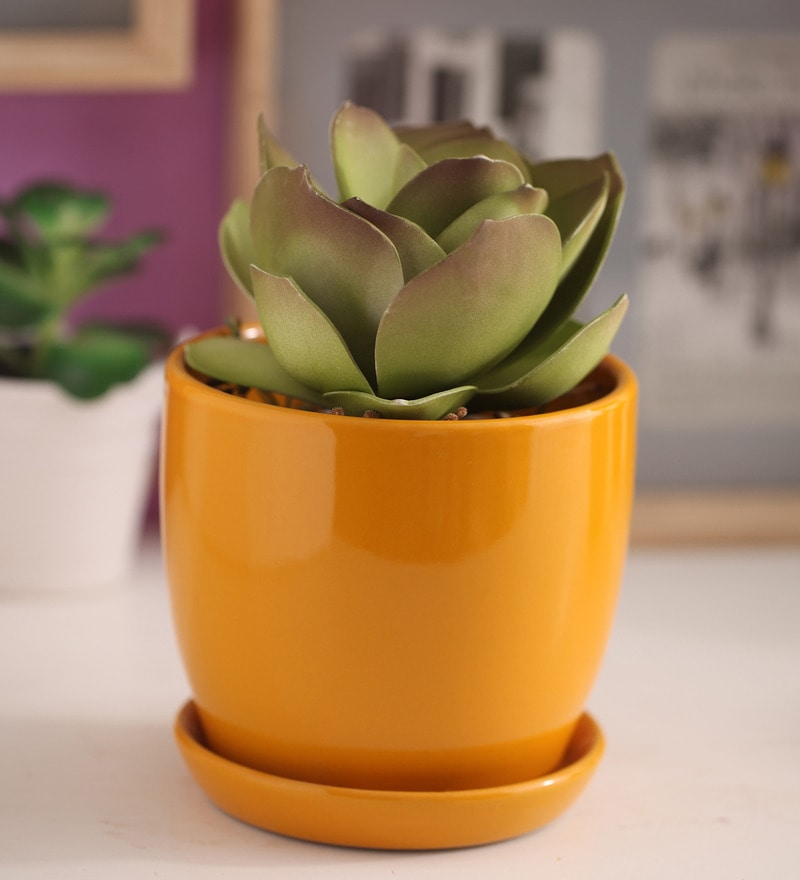 Yellow Glazed Ceramic 6 x 6.5 Inch Table Top Planter with Plate by Gaia