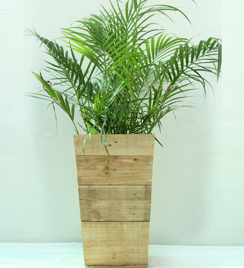 Wooden Slap Planter -Large by Green Gardenia