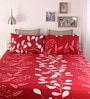 Red Cotton Queen Size Bed Sheet - Set of 3 by Home Ecstasy