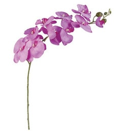 Importwalas Variant Style Butterfly Orchid Single Stick - Purple