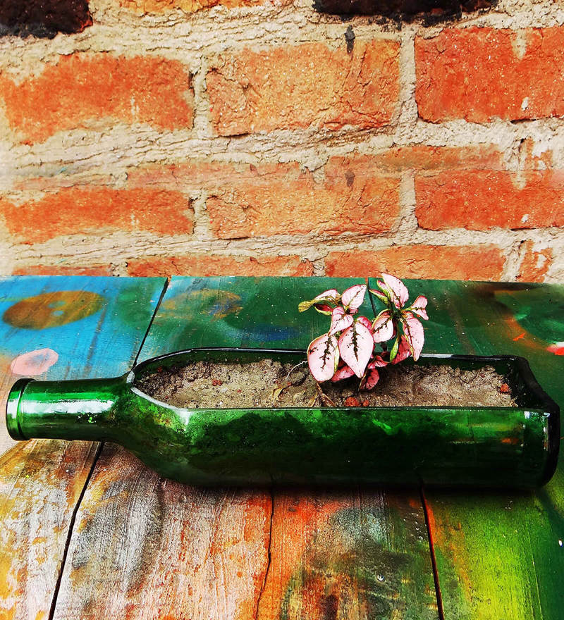 Recycled Wine Bottle Table Top Planter by Kavi