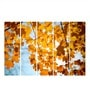 Multiple Frames Printed Yellow Leaves Art Panels like Painting - 5 Frames by 999Store