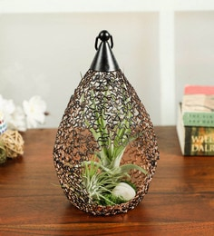Terrarium Smart Plant Buy Terrarium Smart Plant Online In India
