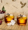 Ocean Tulip 300 ML Whisky Glasses - Set of 6