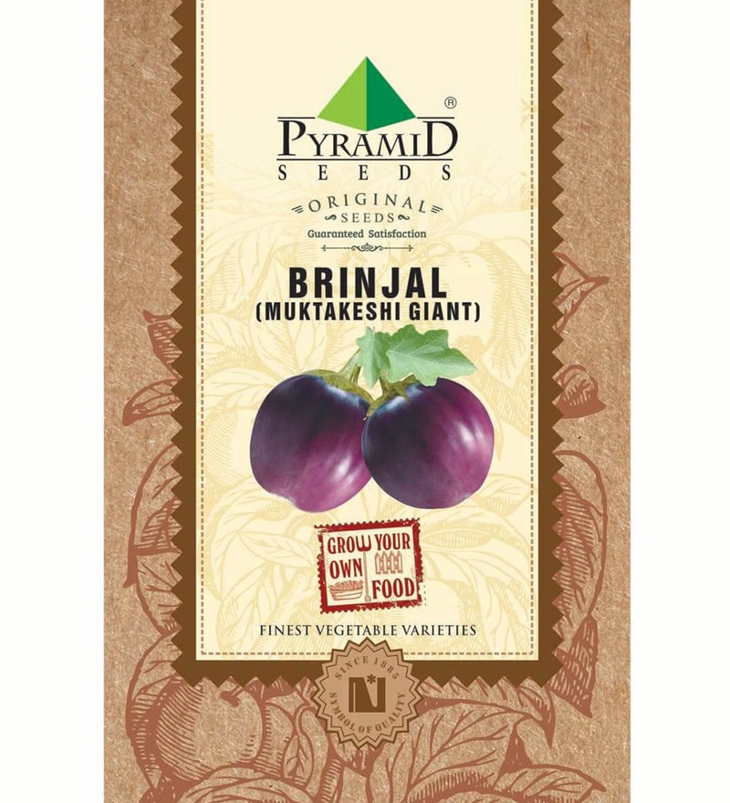 Brinjal Muktakeshi Giant Seeds by Pyramid Seeds