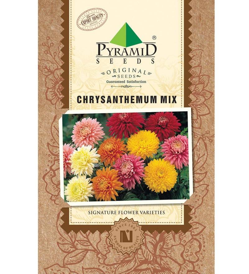 Chrysanthemum Mix Seeds by Pyramid Seeds