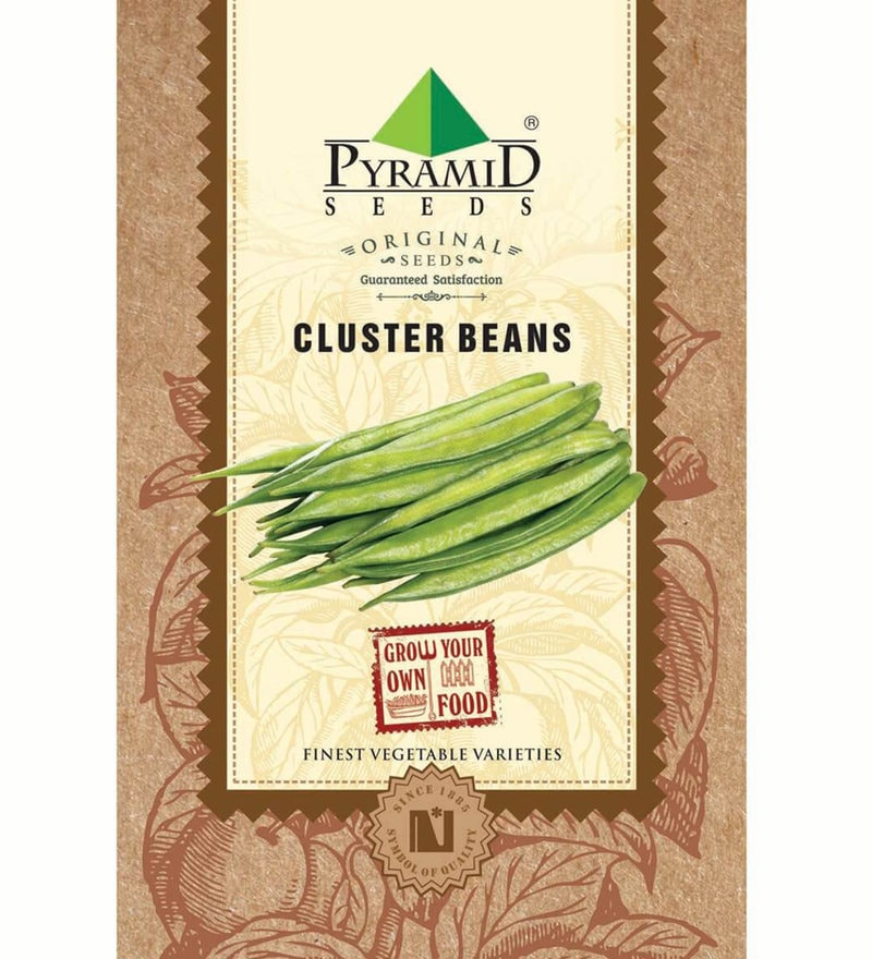 Cluster Beans Seeds by Pyramid Seeds