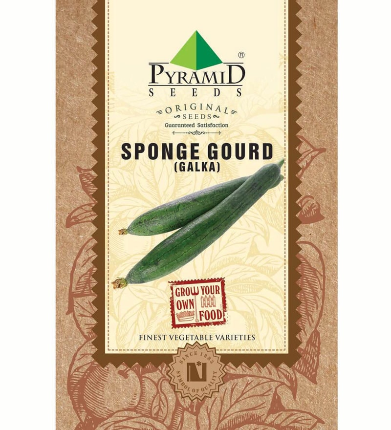 Sponge Gourd Seeds by Pyramid Seeds