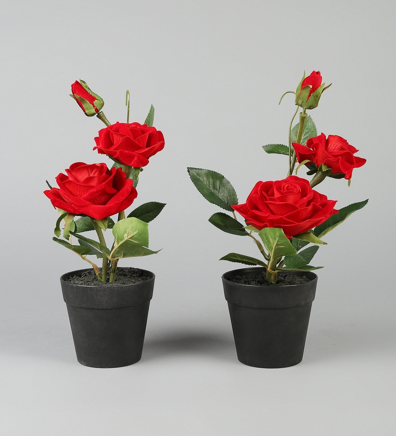 Pepperfry & Red PP \u0026 PVC Artificial Rose Flowers with Pot - Set of 2 by Wonderland