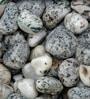 Zebra 1kg Pebbles by Tile Italia Pebbles