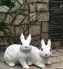 Pair of Rabbit Decoration by Wonderland